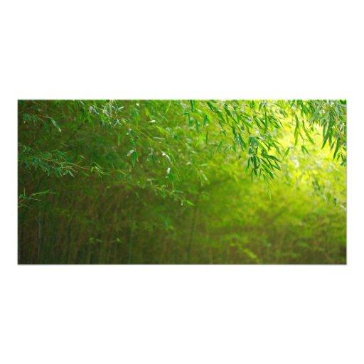 Bosque de bambú tarjetas personales con fotos
