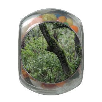 Bosque de color verde oscuro jarras de cristal