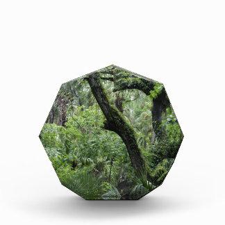 Bosque de color verde oscuro