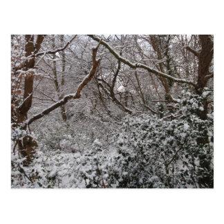 Bosque de Epping en invierno Tarjetas Postales