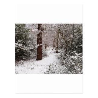 Bosque de Epping en la nieve Tarjetas Postales