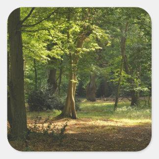 Bosque de Epping Pegatina Cuadrada