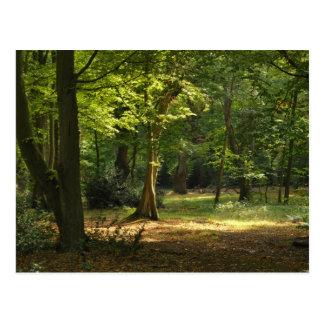 Bosque de Epping Tarjetas Postales