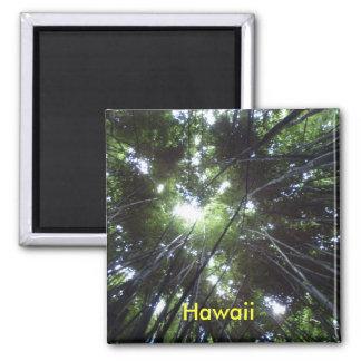 Bosque de Hawaii Bambo Imán Cuadrado