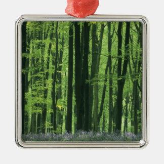 Bosque de Inglaterra, de la haya y Bluebells Adorno Navideño Cuadrado De Metal