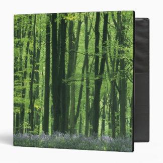 """Bosque de Inglaterra, de la haya y Bluebells Carpeta 1 1/2"""""""