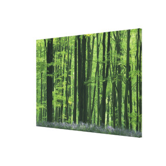 Bosque de Inglaterra, de la haya y Bluebells Lona Envuelta Para Galerías
