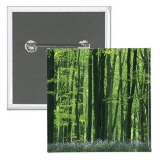 Bosque de Inglaterra, de la haya y Bluebells Pin Cuadrada 5 Cm
