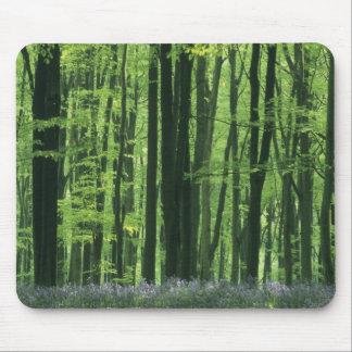 Bosque de Inglaterra, de la haya y Bluebells Tapetes De Ratones