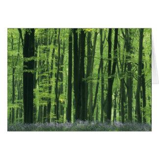 Bosque de Inglaterra, de la haya y Bluebells Tarjeta De Felicitación