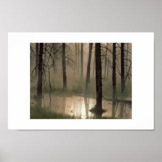 Bosque de inundaciones póster