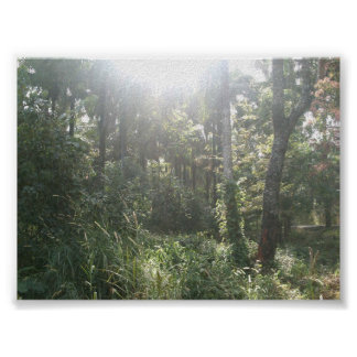 Bosque de Kwoi Póster