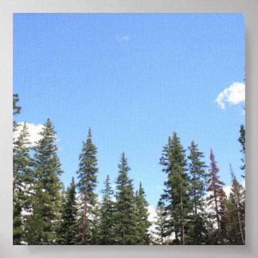 Bosque de la cima de la montaña póster