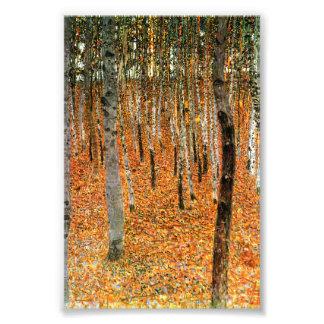 Bosque de la haya por las impresiones de la foto