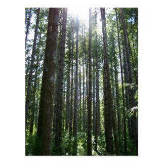 Bosque de la isla de Vancover Tarjeta Postal
