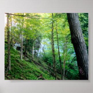 Bosque de la ladera póster
