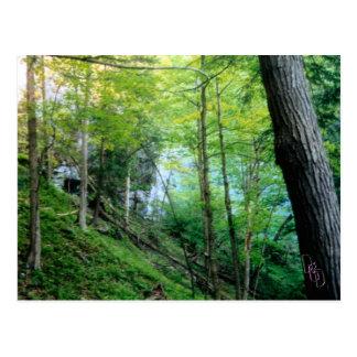 Bosque de la ladera postales