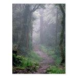 Bosque de la nube, el monte Kilimanjaro, Tanzania Tarjetas Postales