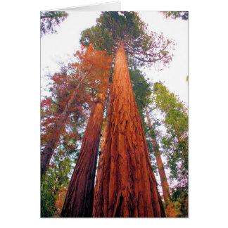 Bosque de la secoya - esconda la tarjeta de felici