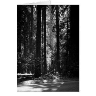 Bosque de la secoya, Grove del fundador, 1966 Tarjeta De Felicitación