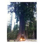 Bosque de la secoya postal