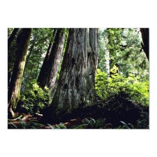 Bosque de la secoya, Prairie Creek Comunicado Personal