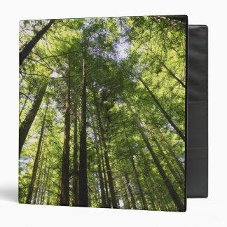 """Bosque de la secoya, Rotorua, Nueva Zelanda Carpeta 1 1/2"""""""