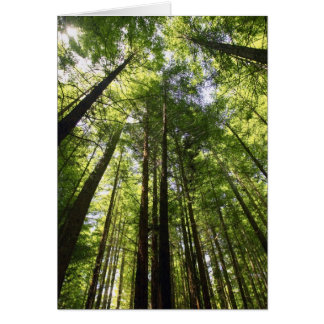 Bosque de la secoya, Rotorua, Nueva Zelanda Felicitacion