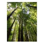Bosque de la secoya, Rotorua, Nueva Zelanda Tarjetas Postales