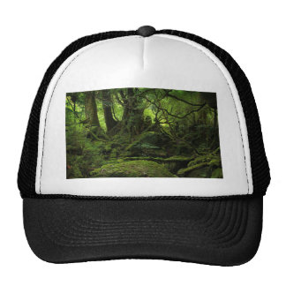 Bosque de la selva del musgo