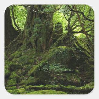Bosque de la selva del musgo pegatina cuadrada