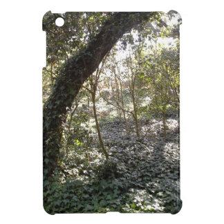 Bosque de la tarde