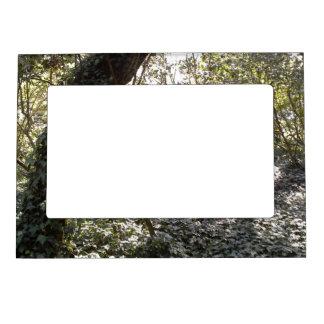 Bosque de la tarde marcos magneticos para fotos