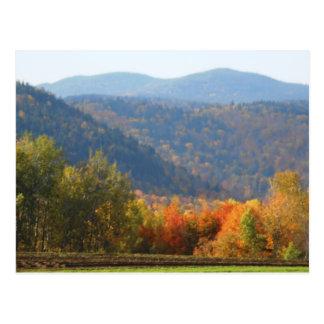 Bosque de las montañas del otoño del Adirondacks Postal