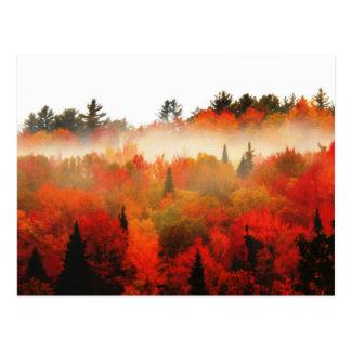 Bosque de las montañas del otoño del Adirondacks Tarjetas Postales