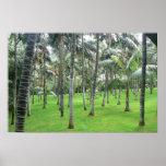 Bosque de las palmeras póster