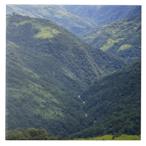 Bosque de las tierras de labrantío y de Himalaya e Azulejo Cuadrado Grande