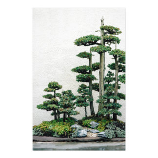 Bosque de los bonsais del enebro papelería de diseño