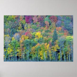 Bosque de madera dura mezclado, parque de Gatineau Posters