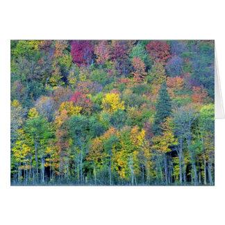 Bosque de madera dura mezclado, parque de Gatineau Felicitacion