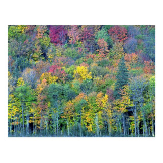 Bosque de madera dura mezclado, parque de Gatineau Postal