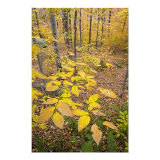 Bosque de madera dura septentrional en New Hampshi Fotografías