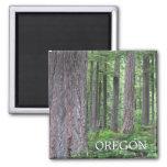 Bosque de Oregon