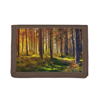 Bosque de septiembre