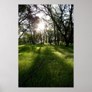 Bosque de sombras poster