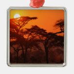 Bosque del acacia silueteado en la puesta del sol, ornamentos de reyes magos
