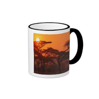 Bosque del acacia silueteado en la puesta del sol, taza de dos colores