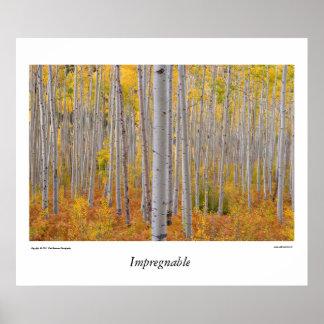Bosque del árbol de Colorado Aspen Póster