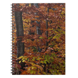 Bosque del árbol de haya cuaderno