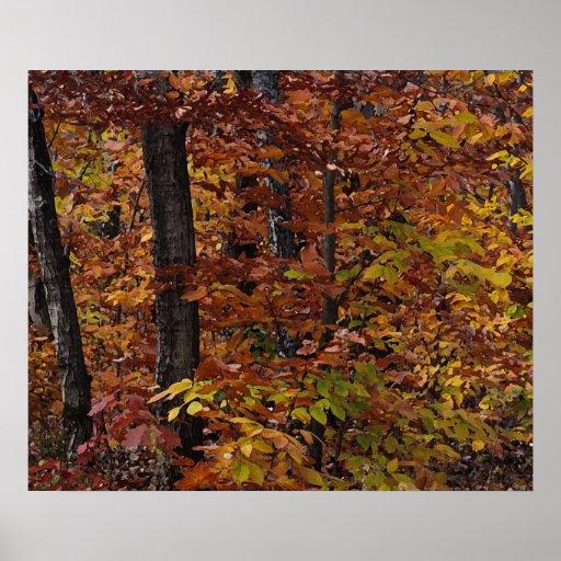 Bosque del árbol de haya poster